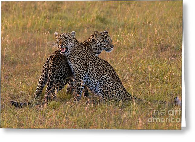 Bothers Greeting Cards - Fire and Ice Greeting Card by Ashley Vincent