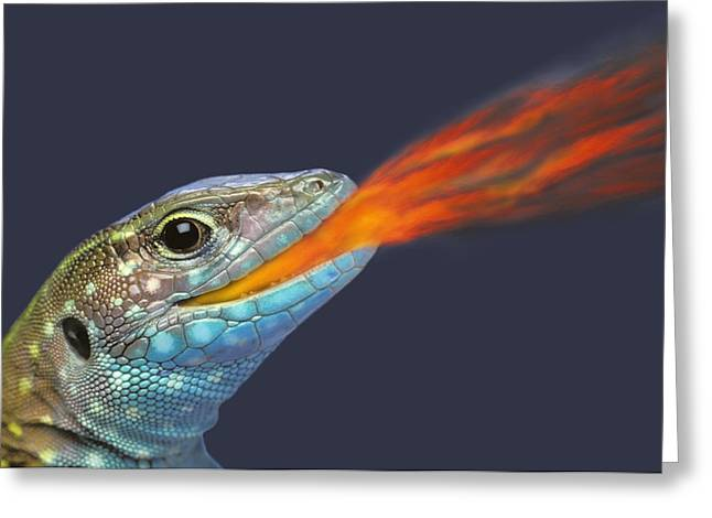 Combusting Greeting Cards - Fire-breathing Rainbow Lizardbritish Greeting Card by Thomas Kitchin & Victoria Hurst