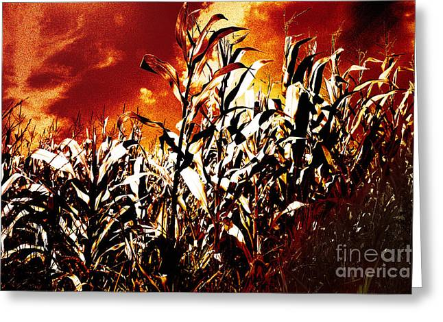 Consume Mixed Media Greeting Cards - Fire in the corn field Greeting Card by Gaspar Avila