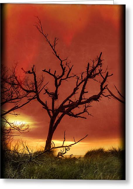 Beach At Night Greeting Cards - Fire in the Sky Greeting Card by Debra and Dave Vanderlaan
