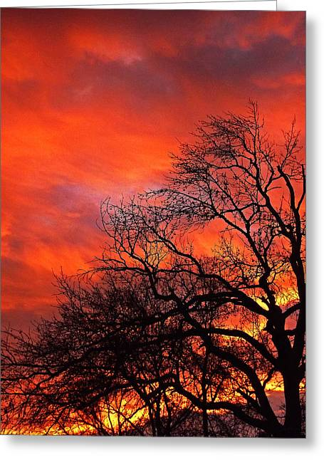 Southern Appalachians Greeting Cards - Fire in the Sky Greeting Card by Johan Hakansson