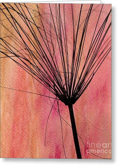 Weedy Greeting Cards - Fire in the Sky Greeting Card by Sabrina L Ryan