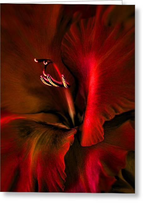 Gladiolas Greeting Cards - Fire Red Gladiola Flower Greeting Card by Jennie Marie Schell