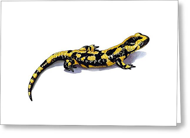 Fire Salamander Greeting Cards - Fire salamander, artwork Greeting Card by Science Photo Library