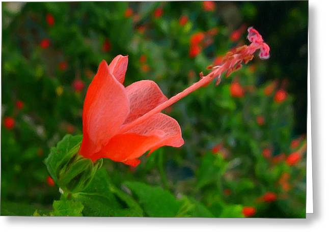 Organic Greeting Cards - Firecraker Hibiscus Flower Greeting Card by Lanjee Chee