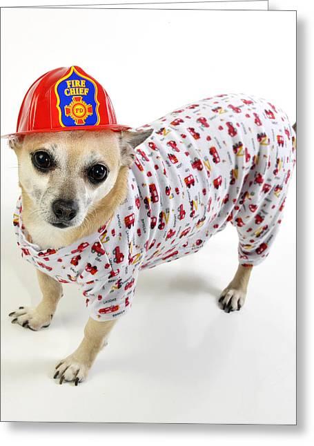 Pajamas Photographs Greeting Cards - Fireman Chihuahua Greeting Card by Rebecca Brittain