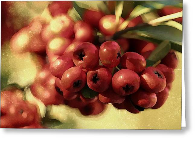 Firethorn Greeting Card by Jean Connor