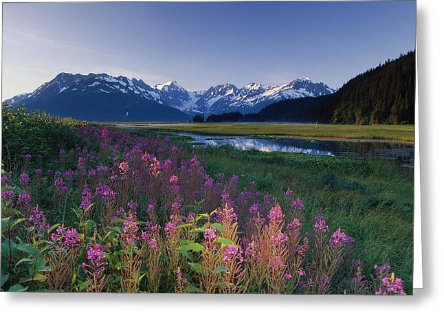Beautiful Scenery Greeting Cards - Fireweed Along Turnagain Arm Chugach Greeting Card by Michael DeYoung