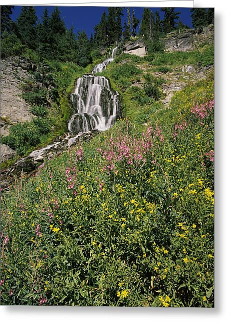 Crater Lake National Park Greeting Cards - Fireweed At Vidae Falls, Crater Lake Greeting Card by Panoramic Images