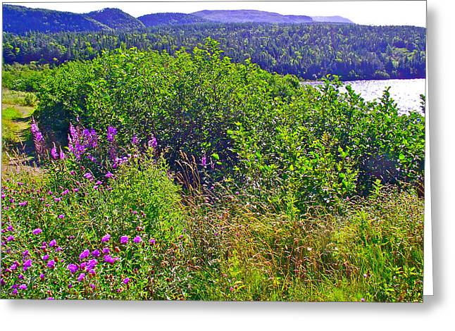 Pond In Park Greeting Cards - Fireweed by Trout Pond in Gros Morne NP-NL Greeting Card by Ruth Hager