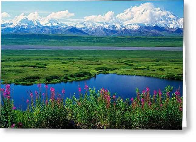 Alaska Scene Greeting Cards - Fireweed Flowers Epilobium Latifolium Greeting Card by Panoramic Images