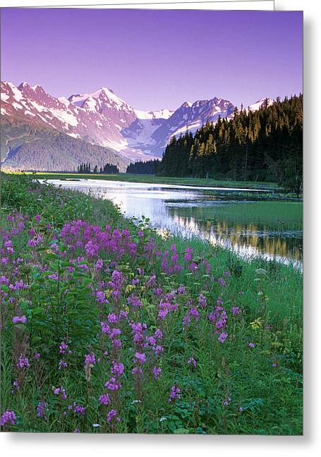 Beautiful Scenery Greeting Cards - Fireweed In Bloom Along Pond Wchugach Greeting Card by Jeff Schultz