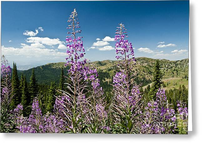 Idaho Scenery Greeting Cards - Fireweed In Hells Canyon, Oregon Greeting Card by William H. Mullins
