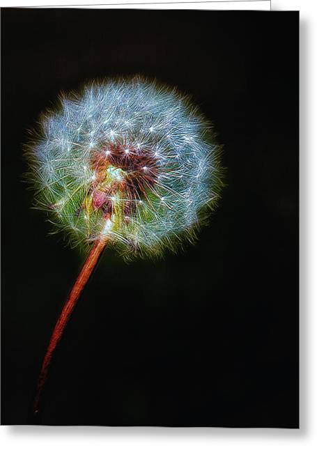 Weed Line Greeting Cards - Firework Dandelion Greeting Card by Bill Tiepelman