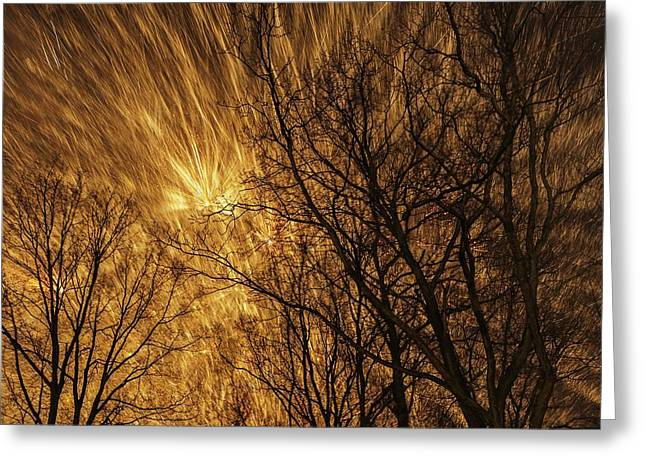Fireworks And Trees Greeting Card by Babak Tafreshi