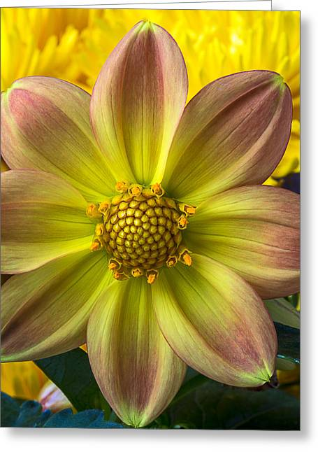 Fireworks Greeting Cards - Fireworks Dahlia Greeting Card by Garry Gay