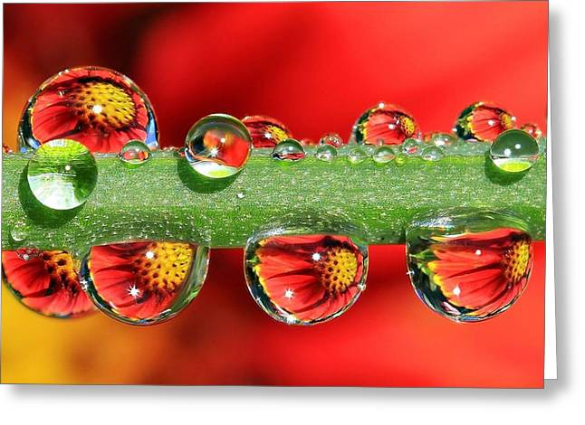 Refraction Greeting Cards - Firey Drops Greeting Card by Gary Yost