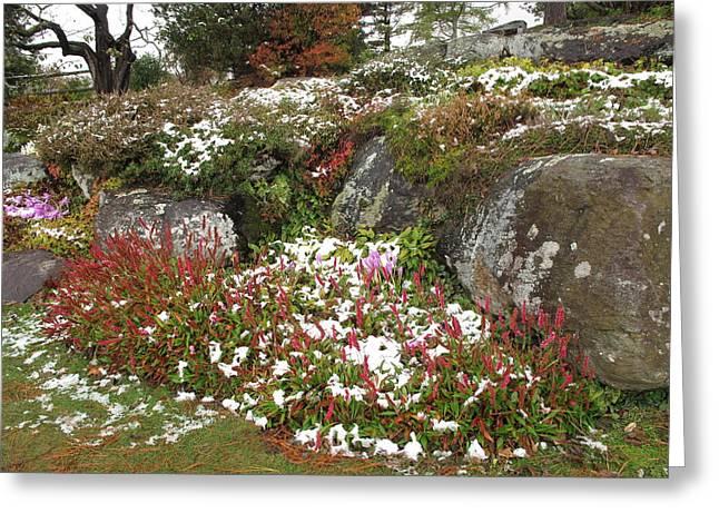 Barbara Mcdevitt Greeting Cards - First Autumn Snow Greeting Card by Barbara McDevitt