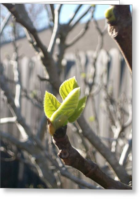Slidell Greeting Cards - First Bud of Spring 2 Greeting Card by  Michelle Hayes