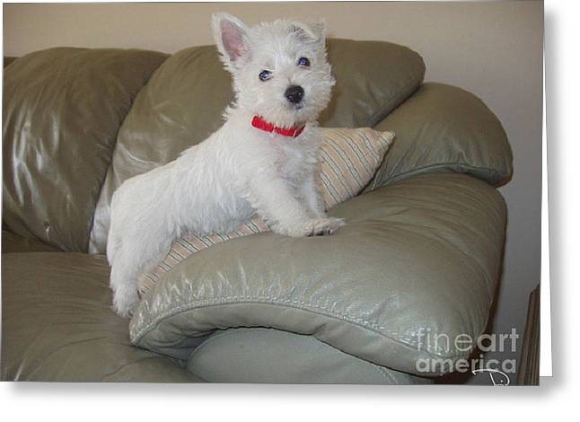 Westie Pups Greeting Cards - First Day Home Greeting Card by Dianne Wendell