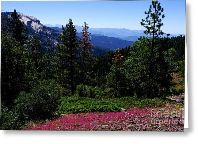 Ladnscape Greeting Cards - First Day of Summer in Redwood Canyon Greeting Card by Kitrina Arbuckle