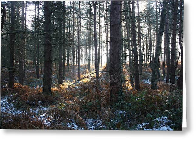 Sledge Training Greeting Cards - First fall of Snow on Cannock Chase Greeting Card by Jean Walker