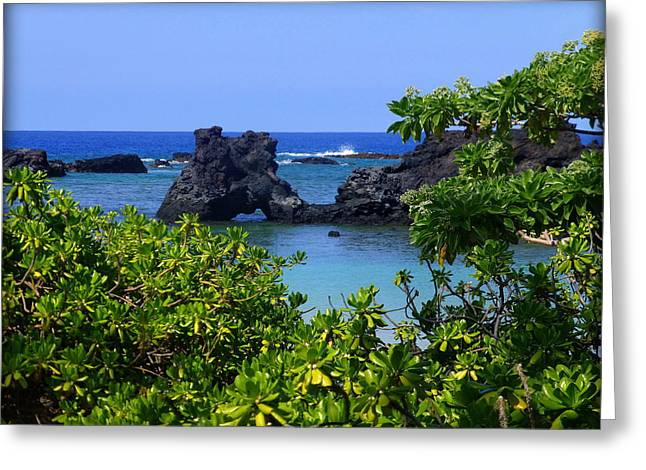 Sea Plants Greeting Cards - First Glimpse of a Tropical Paradise Greeting Card by Lori Seaman