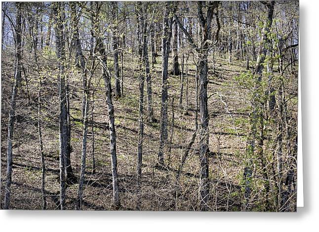 Hartsburg Greeting Cards - First Green on the Bluffs Greeting Card by Cricket Hackmann