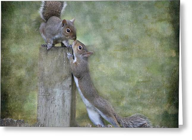 Animals Love Greeting Cards - First Kiss Greeting Card by Angie Vogel