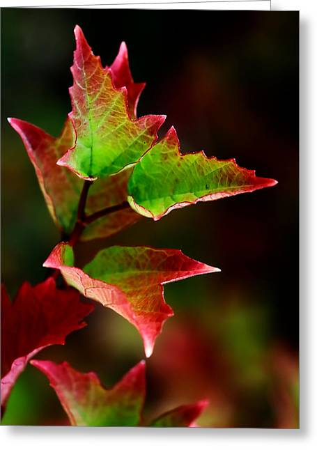 First Kiss Of Autumn Greeting Card by Mah FineArt