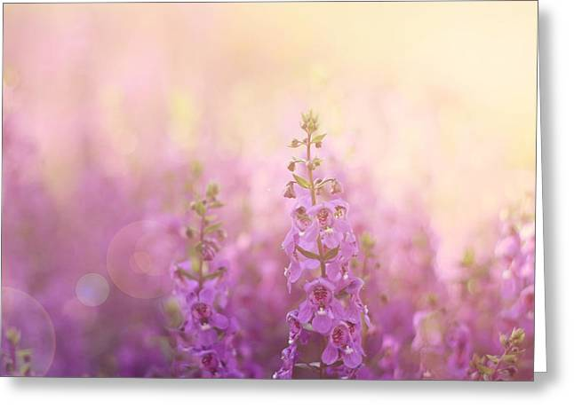 Flower Photos Greeting Cards - First Light Greeting Card by Amy Tyler