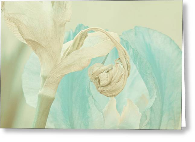 Soft Light Greeting Cards - First Light Greeting Card by Bonnie Bruno