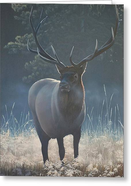 Peter Mathios Greeting Cards - First Light - Bull Elk Greeting Card by Peter Mathios