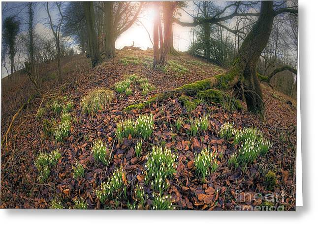 Against The Sunlight Greeting Cards - First Light of Spring Greeting Card by Edmund Nagele