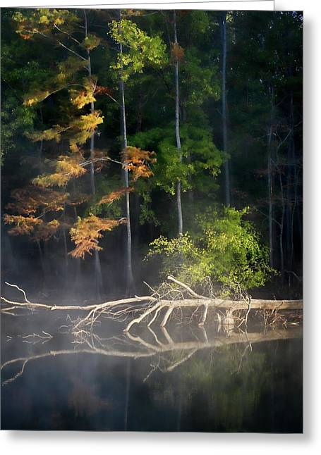 First Light Greeting Card by Lana Trussell