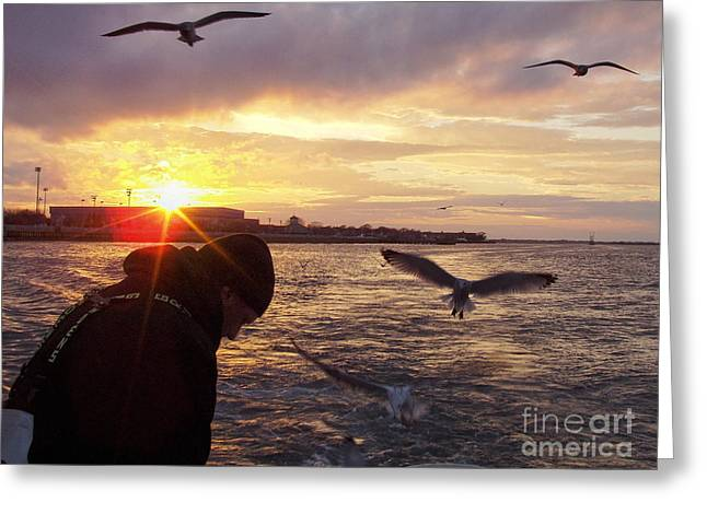 Sunset Framed Prints Greeting Cards - First Mate Filleting Fish with Seagulls Watching Greeting Card by John Telfer