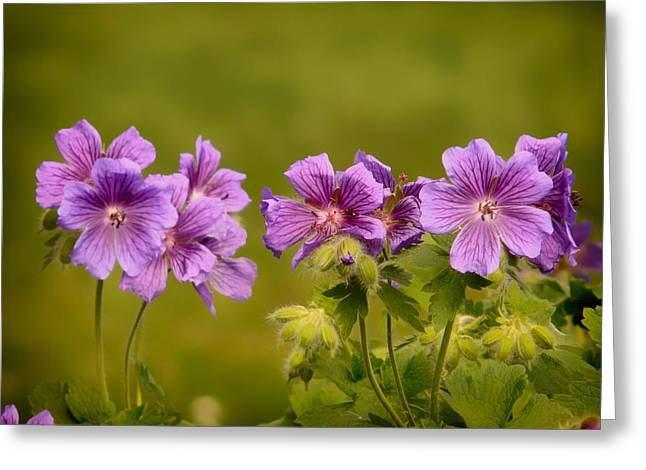 Macro Geranium Flower Greeting Cards - First of Summer Greeting Card by Mountain Dreams