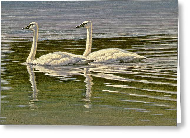 Water Bird Greeting Cards - First Open Water - Trumpeters Greeting Card by Paul Krapf