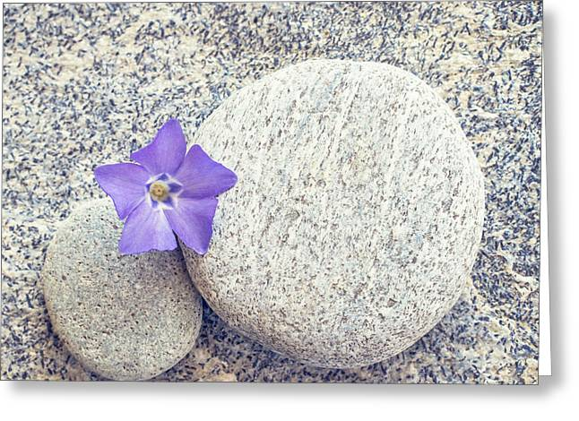 Space Flower Greeting Cards - First periwinkle  Greeting Card by Delphimages Photo Creations