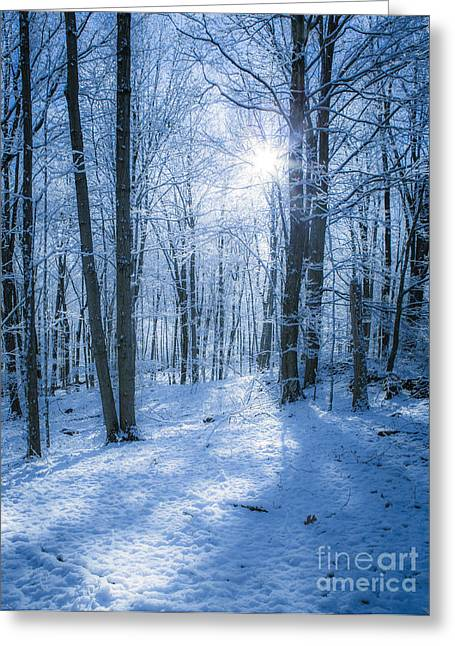 Snowstorm Greeting Cards - First Snow Greeting Card by Diane Diederich