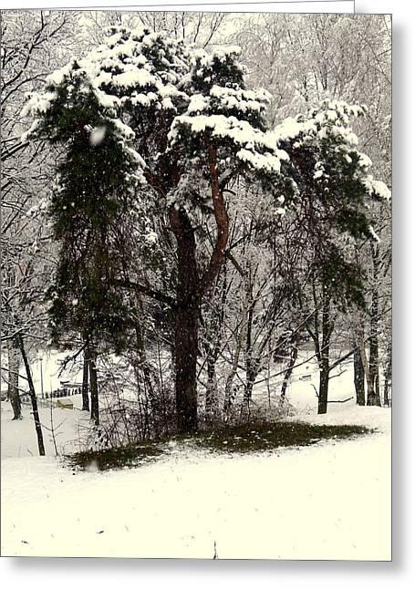 Henryk Greeting Cards - First Snow Greeting Card by Henryk Gorecki