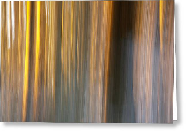 Sunset Abstract Greeting Cards - First snow in sunset Greeting Card by Davorin Mance