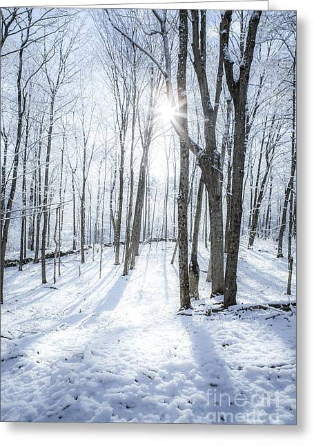 Fresh Snow Greeting Cards - First Snowfall Greeting Card by Diane Diederich