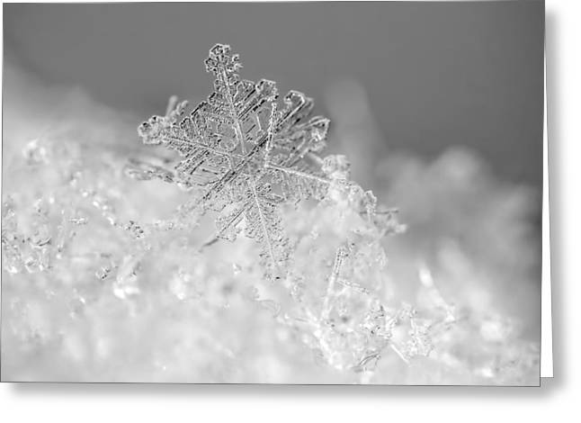 Christmas Art Greeting Cards - First Snowflake Greeting Card by Rona Black