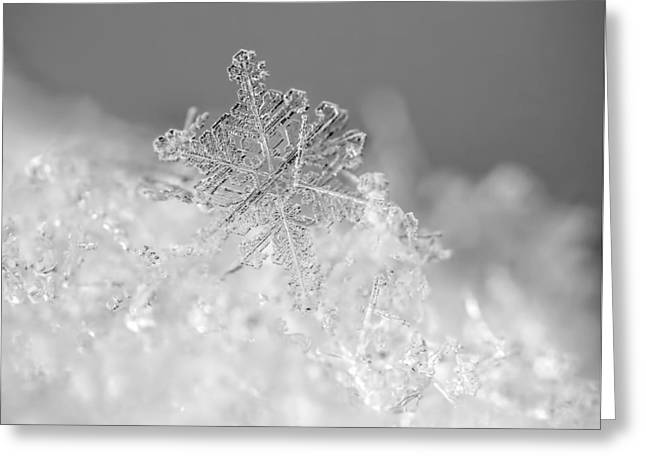 Snowflake Greeting Cards - First Snowflake Greeting Card by Rona Black