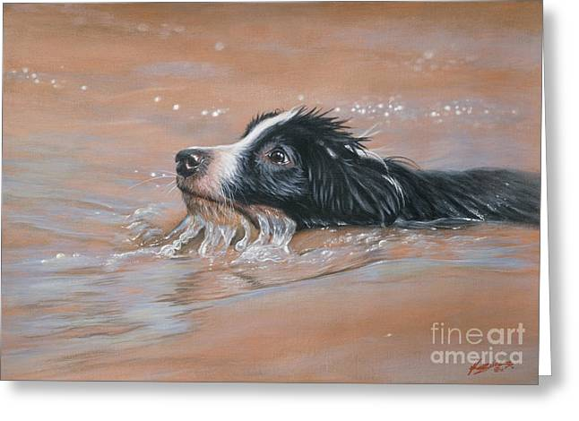 Collie Greeting Cards - First swim Greeting Card by John Silver
