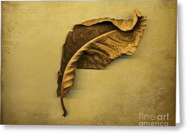 First To Fall Greeting Card by Jan Bickerton
