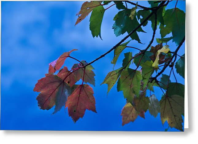 Illuminates Greeting Cards - First Touch of Fall Greeting Card by Jemmy Archer