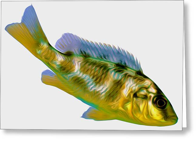 Coldblooded Greeting Cards - Fish 7 Greeting Card by Lanjee Chee