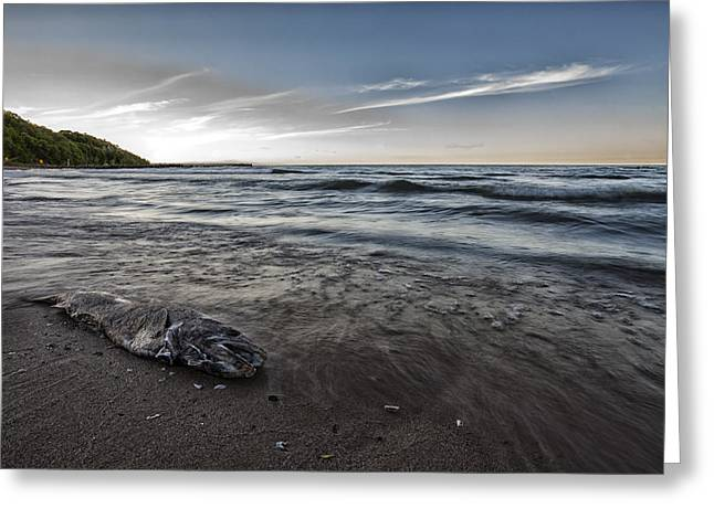 Shorewood Greeting Cards - Fish and Sand Greeting Card by CJ Schmit